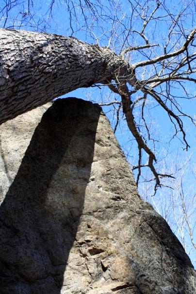Bear Rock